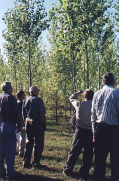 Visitors on a tour of a early hybrid poplar experimental plot at the Alberta-Pacific pulp mill near Athabasca, Alberta.