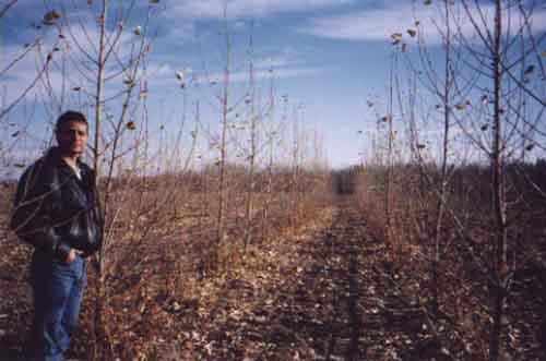Trees growing on land spread with fly ash in trials conducted by Al Berschi for his master's thesis research