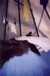 Bear skin covers the sweat lodge inside the tipi