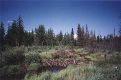Wetland terrain in northeastern Alberta near Utikima Lake