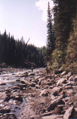 One of the tributaries in the Kakwa River Watershed.  This region near Grande Prairie in northwestern Alberta is relatively undisturbed.  The Kakwa is one of three areas included in the Northern Watershed Study which looks at the impact of industrial development