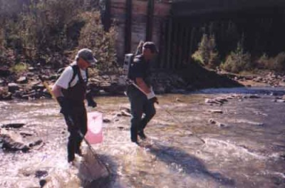 Garry and Paul demonstrate their electrofishing technique.  Carry a backpack generator, they sweep the water, discharging a mild electric shock to any fish present.  These fish are temporarily stunned.  Garry and Paul quickly collect them as they rise to the surface, take their measurements and then as they revive, release the fish back into the river.