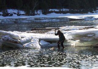 Wayne Roberts at work in his favourite pool, landing a mountain whitefish.