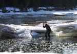 Wayne Roberts at work in his favourite pool, landing a mountain whitefish.