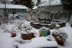 March 31, 2004 - Yesterday was warm, around plus 15 degrees.  Medicine Hat was plus 28! Today, it's snowing in Edmonton.