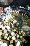 April 19, 2004 - After pumping the snow melt out of the pond, the rocks are ready to be cleaned and restacked.  I'd moved them in the fall trying to find the last of the goldfish to bring in before freeze-up.  The pot of reeds overwintered in the frozen pond and shows some new growth sprouting.
