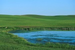 ww_coteau02 - A wetland in a farmers field.  Ducks will nest in the seeded upland where they find cover from predators.