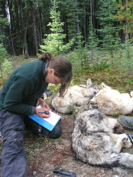Layla Neufeld in the field take research notes of wolf cubs