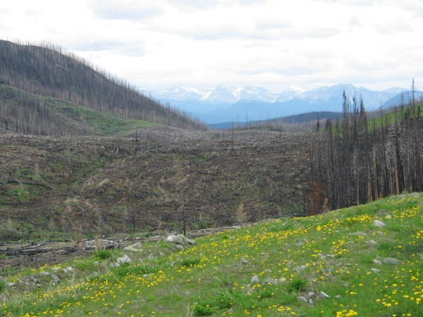 This picture clearly illustrates a previously cut, then burned area in the Dogrib burn. You can see the post-harvest mounding in the cutblock in the foreground that has been burned.