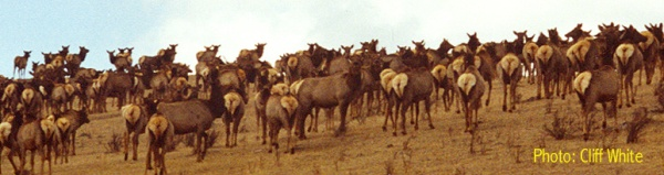 This picture gives an idea of the large herds you see at Ya Ha