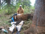 Michael collecting data from sedated grizzly bear