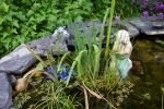 June 2005 - The plants in the pond are doing really well this summer.  The reeds overwintered successfully.