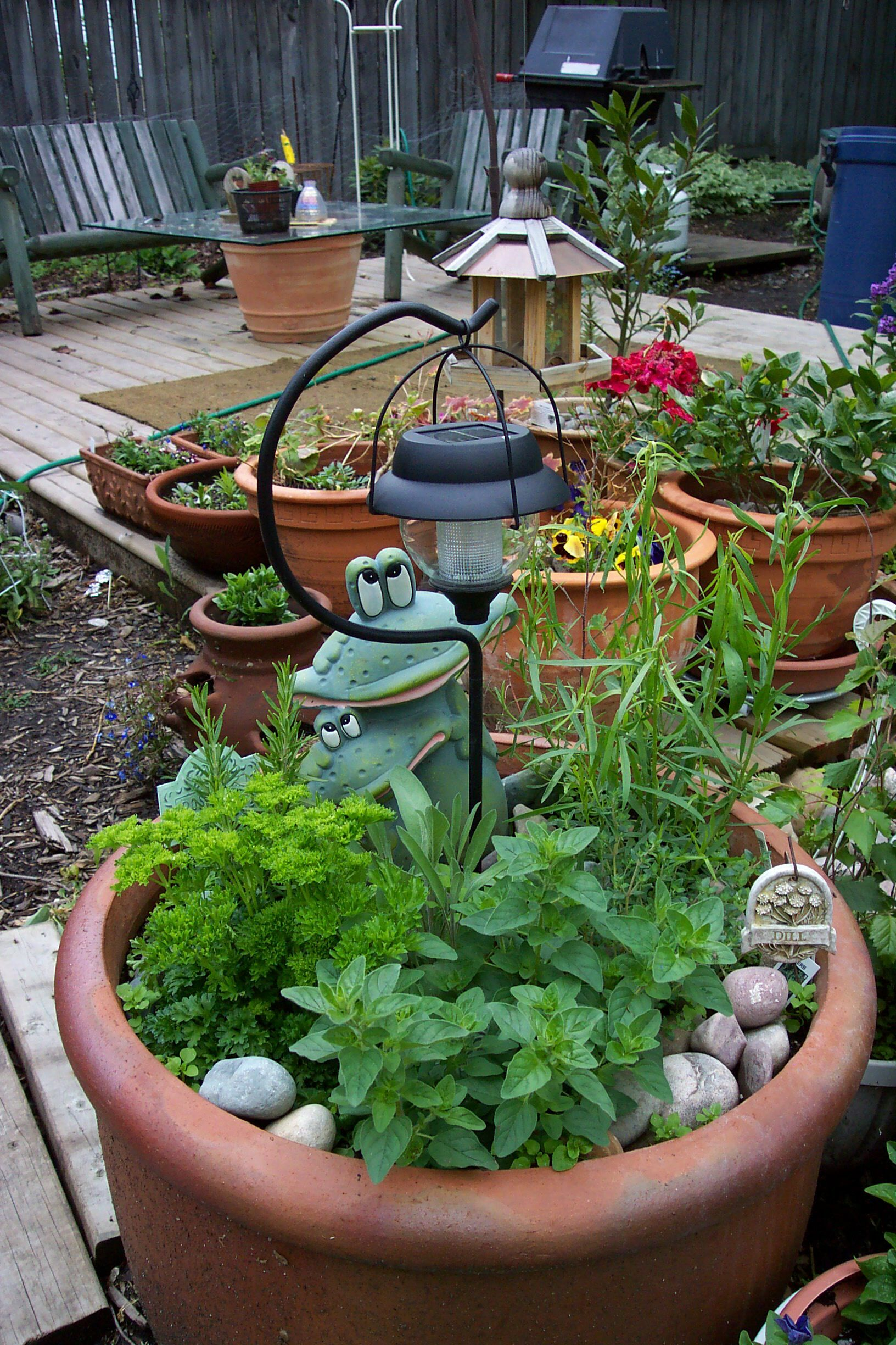 June 2005 - My herbs always seem to do better in this large urn.  I've layered the pot with stones to discourage weeds and to maintain moisture in the soil.