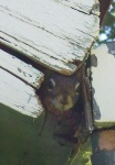 May 2005 - The curious baby squirrel