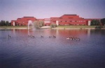 Canada geese swimming in the artificial lake at the Alberta Research Council