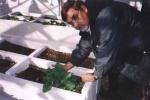 Dr. Moyhuddin Mirze with borage as a medicinal plant