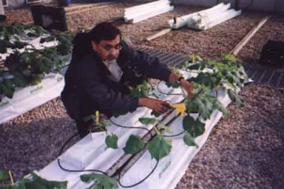 Dr. Moyhuddin Mirza with special growing medium for plants
